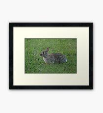 Wild Urban Rabbit Framed Print