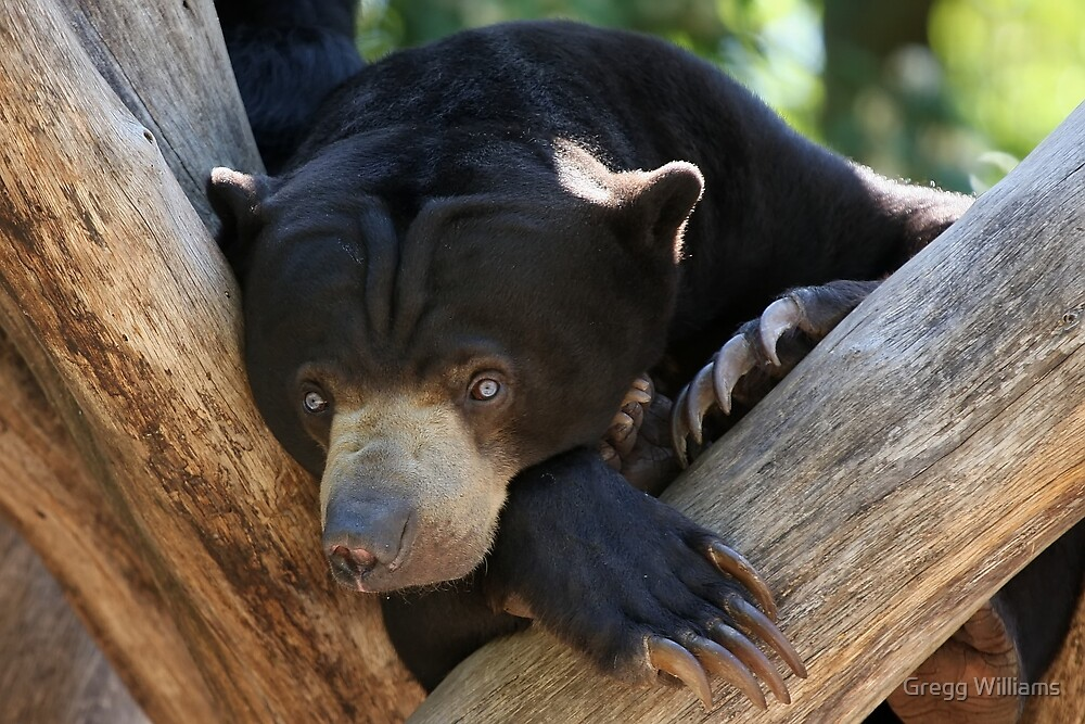 Cute little Bear by Gregg Williams