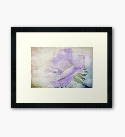 Anemone (From Painted Flowers collection ) Framed Print