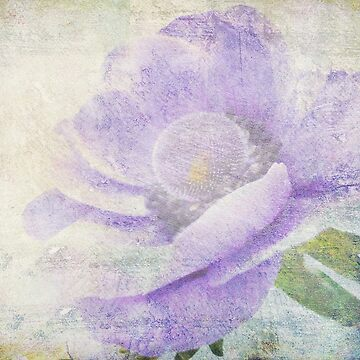 Anemone (From Painted Flowers collection ) by EvaMarIza