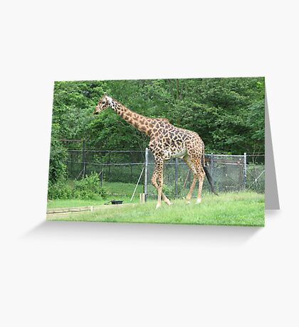 The Giraffe ...Toronto Zoo Greeting Card