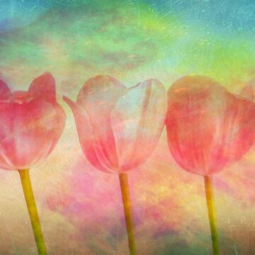 "Tulips 2 (from ""Painted flowers"" collection) by EvaMarIza"