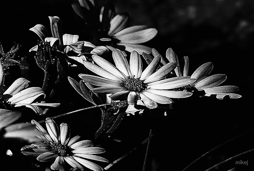 Full Moon Daisys by mikej