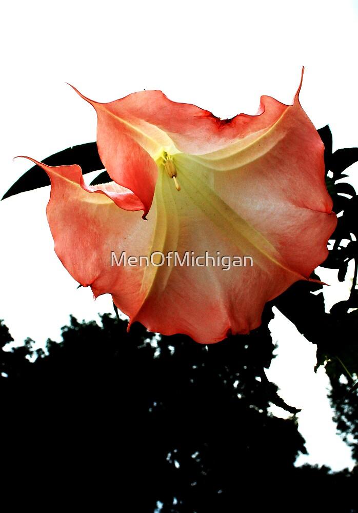 In Bloom by MenOfMichigan