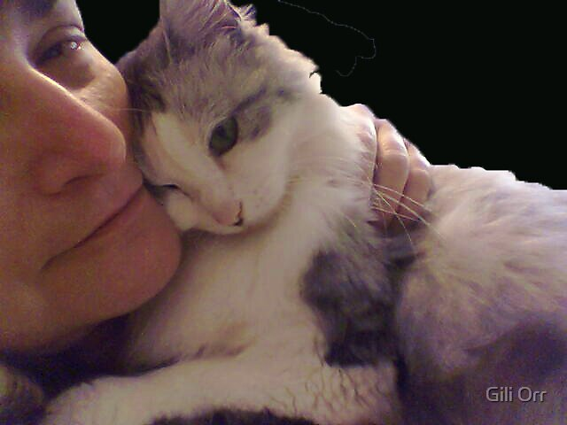 Cat love by Gili Orr