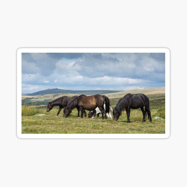 Dartmoor ponies Sticker