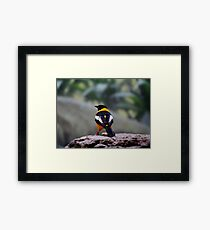 Troupial Feathers Framed Print
