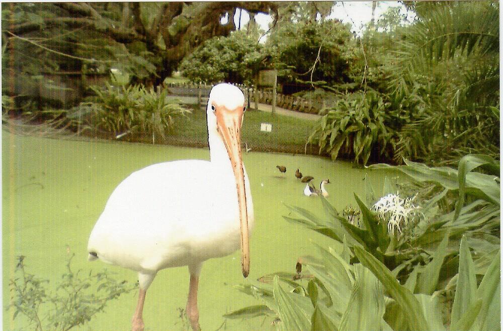 The Pelican by skye11