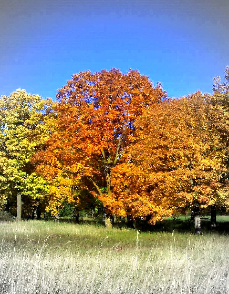 Fall color by babyangel