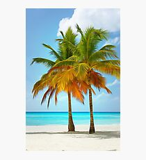 Palm trees on the bank of azure ocean Photographic Print