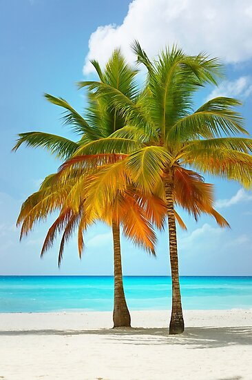 Palm trees on the bank of azure ocean by Igor Drondin