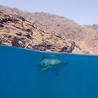A Great White Shark Cruises the Surface at Guadalupe Island, Mexico by Brent Barnes