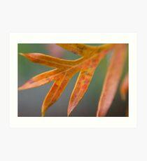 Grevillea Leaf Art Print
