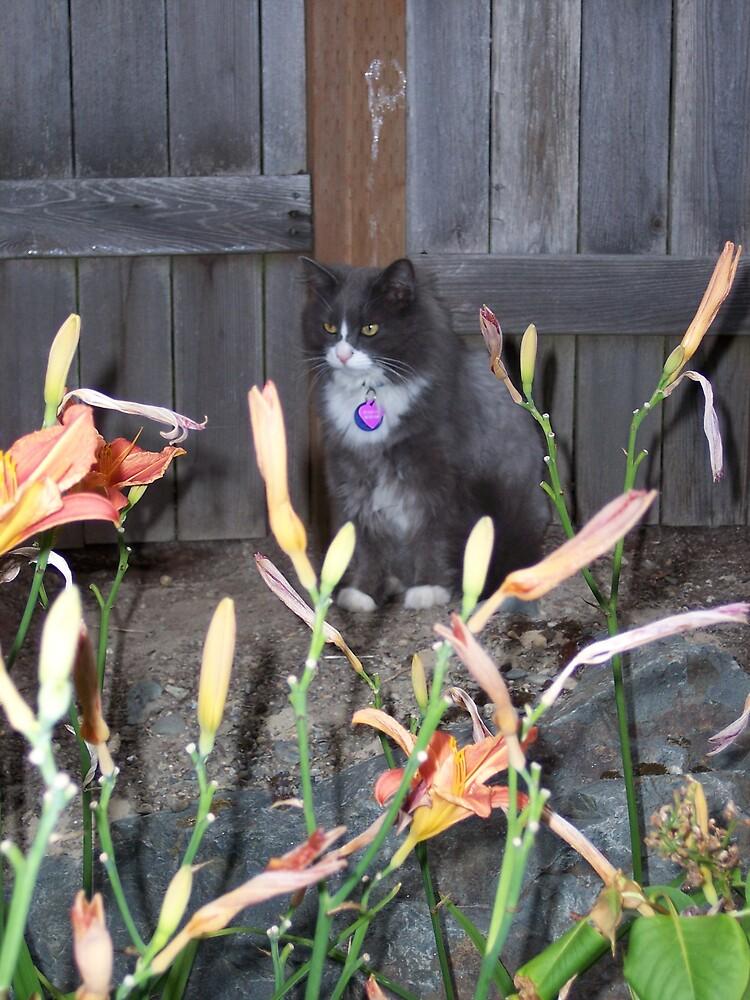 Hunter Cat by Valerie