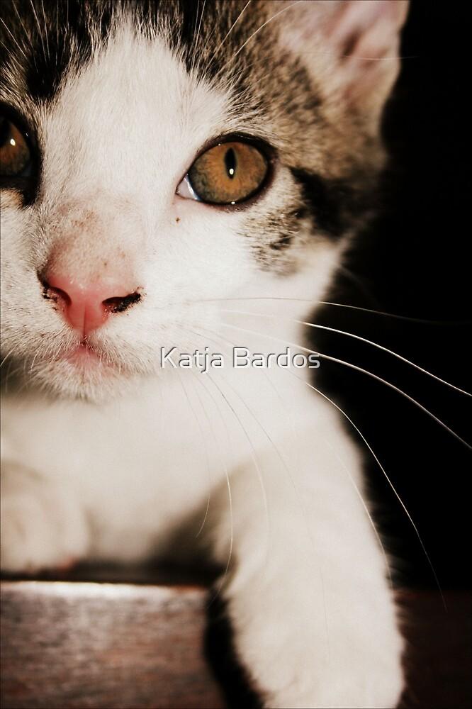 Little Zacky by Katja Bardos