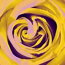 yellow rose by SNAPPYDAVE
