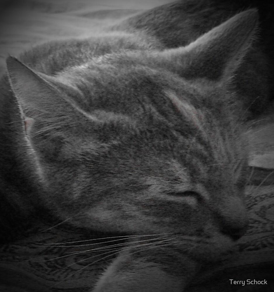 Sleeping M&M by Terry Schock