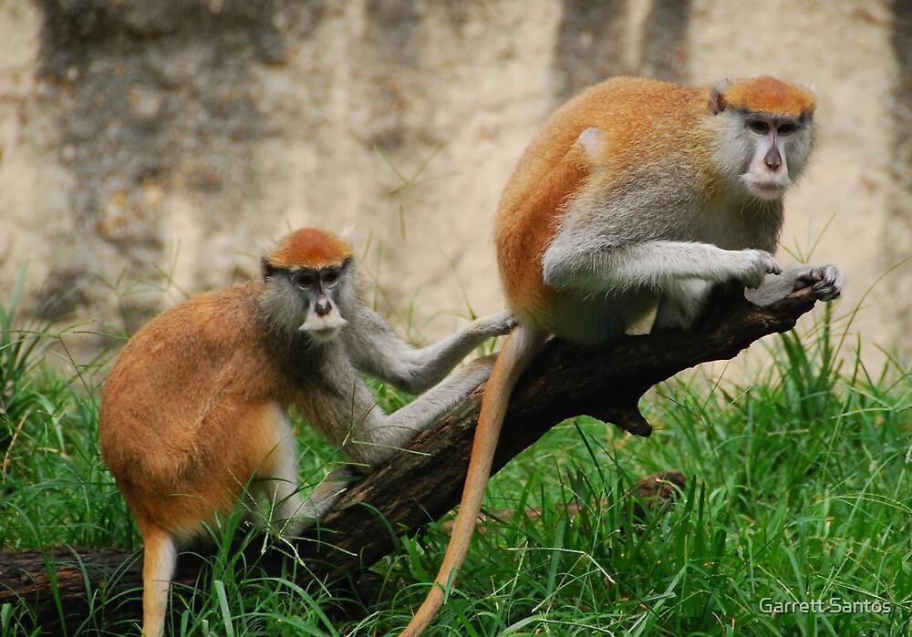 Houston Primates by Garrett Santos