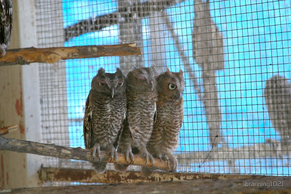 Baby Owls by branning1021