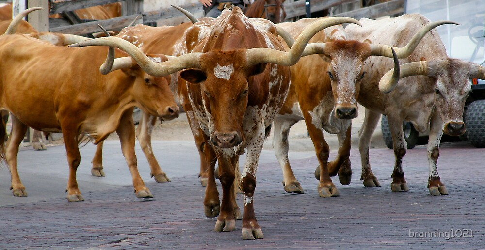 Longhorn Drive by branning1021