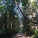 Main Trail 1 by Roxanna Muller