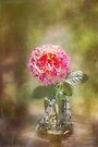 Rose in a Jar by Elaine Teague
