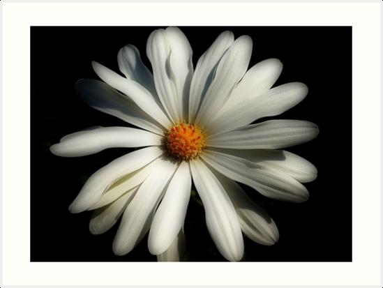 Daisy by EvaMarIza