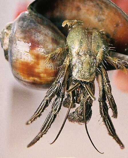 Crab by Amber Finan