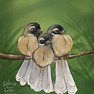 Fantail Cuddles by Rebecca Gibbs