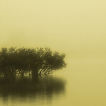Fog on the Lake by ehalv2