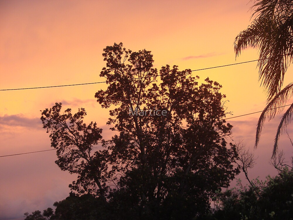 Colouful Banksia Sunset by Martice