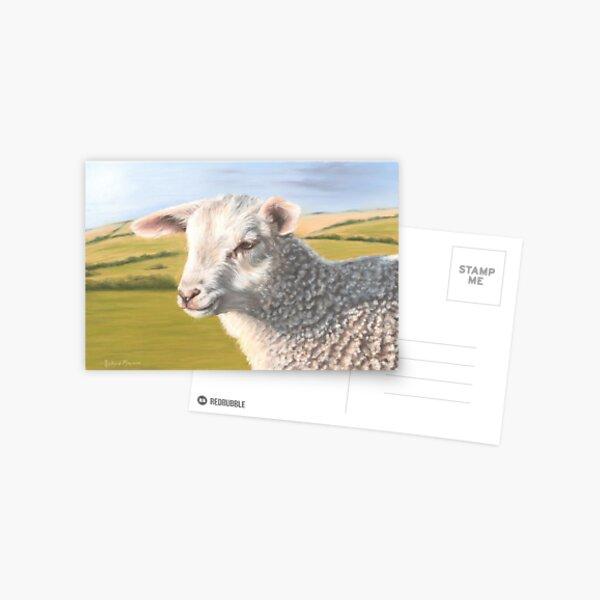 Lamb Postcard