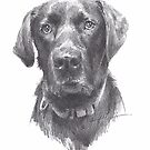 black lab bust drawing by Mike Theuer