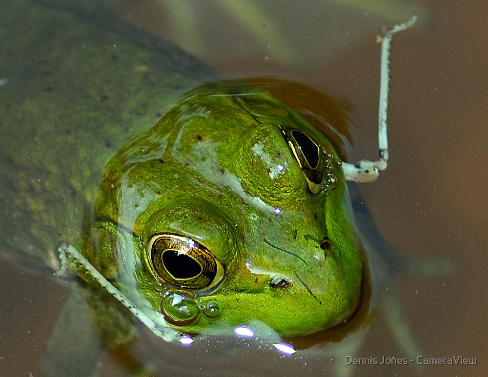 A Full Frog is a Happy Frog by Dennis Jones - CameraView