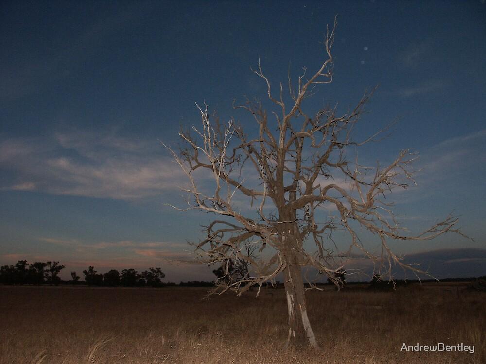Deniliquin tree #026 by AndrewBentley