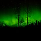 Cold Dark Green Night by peaceofthenorth