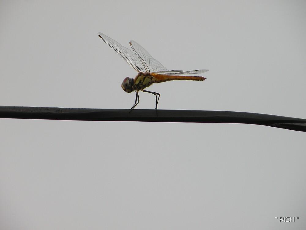 "Dragon take off by "" RiSH """