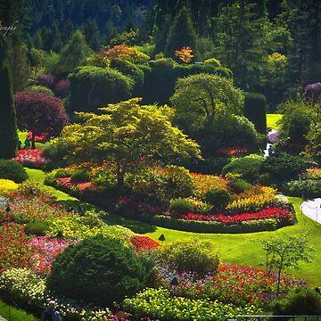 Sunken Garden - Butchart Garden by Photograph2u