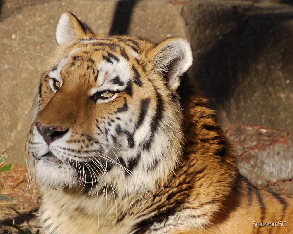 Tiger by SolomomSC