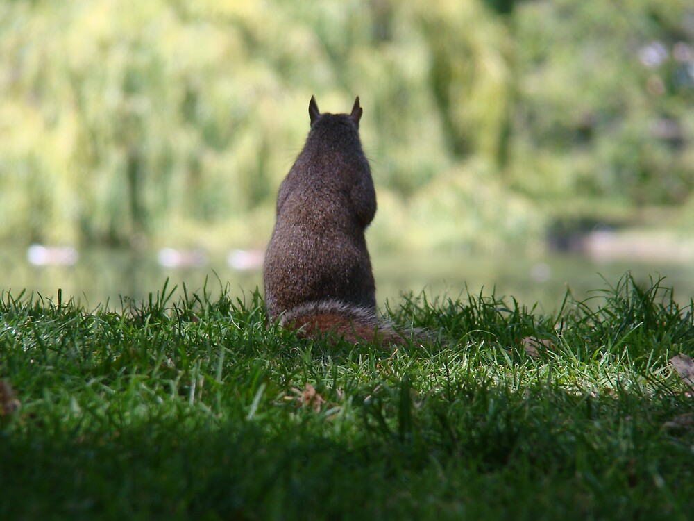Well... a squirrel ;) by Kamila  Jerichow