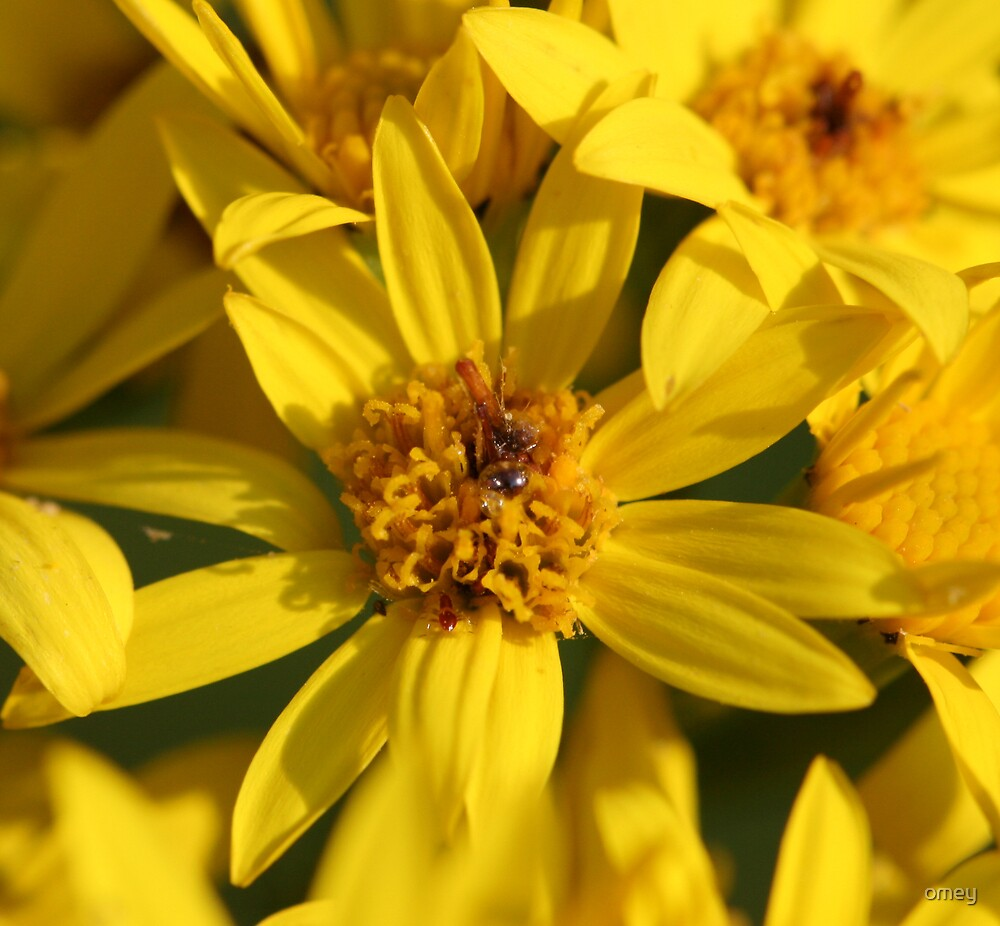 Yellow by omey