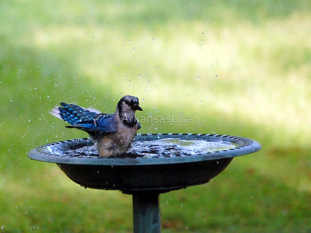 Splish Splash by ArkansasLisa