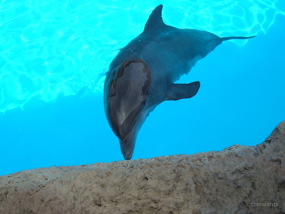 Dolphin by theiwants