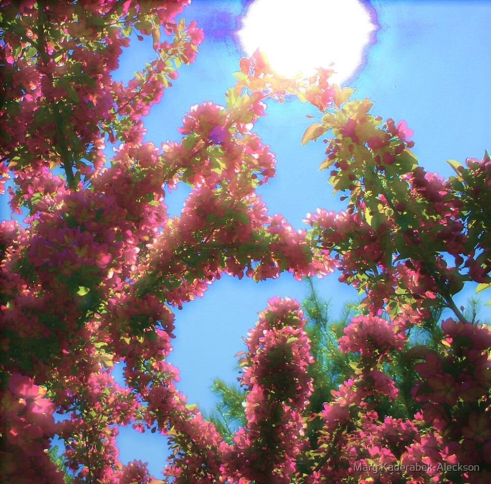 Sun from the Eyes of a Blossom by Mary Kaderabek-Aleckson