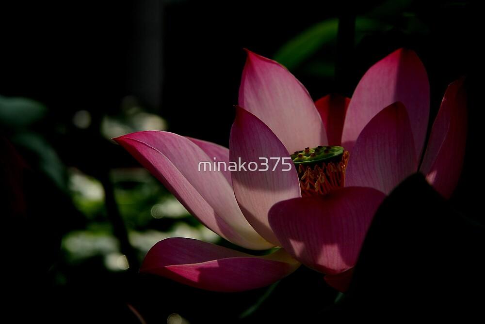 Lotus by minako375