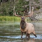 Ready for the rut by Eivor Kuchta