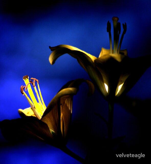 Wisdom's Light by velveteagle