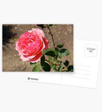 Blushing Postcards