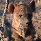 Hyena by Laura Puglia