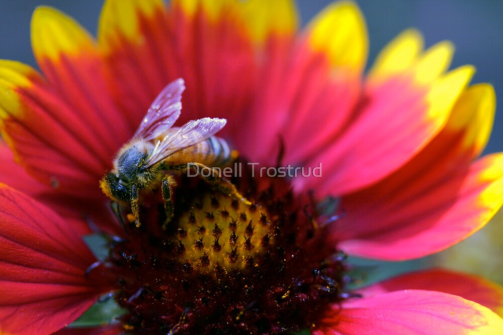 Bee by Donell Trostrud